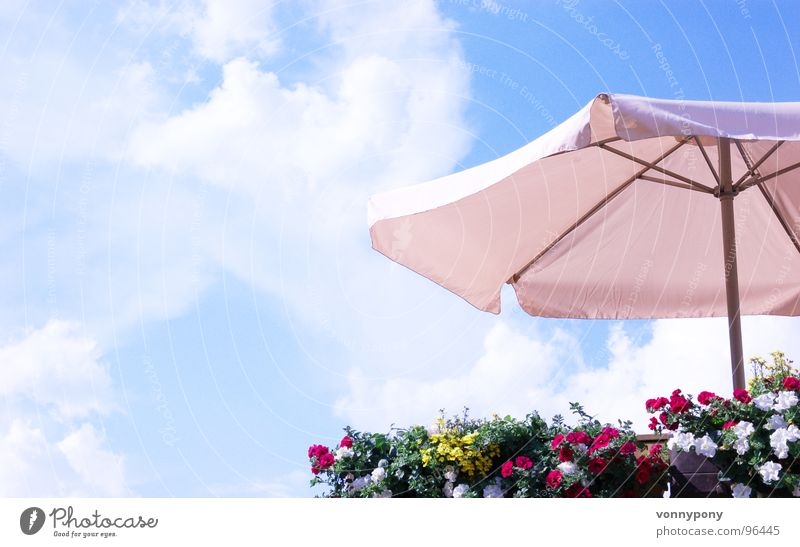 Well protected Flower Sunshade Multicoloured Balcony White Physics Summer Clouds Farm Vacation & Travel Weekend Franconia Sky Blue Protection Above Warmth
