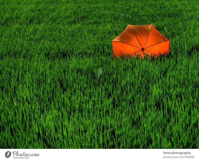 In backlight Cloppenburg Umbrella Sunshade Storm Clouds Grass Blade of grass Meadow Summer Field Green Spring Calm Loneliness Relaxation Sunbathing Forget