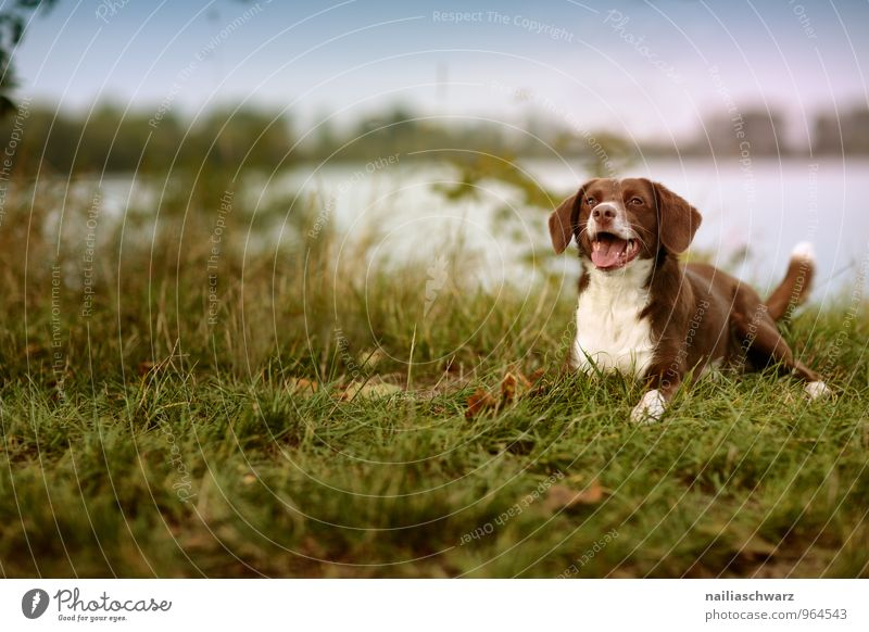 Dog at the lake Nature Summer Lakeside River bank Pond Animal Pet 1 Observe Relaxation Lie Looking Wait Friendliness Happiness Curiosity Cute Blue Brown Green