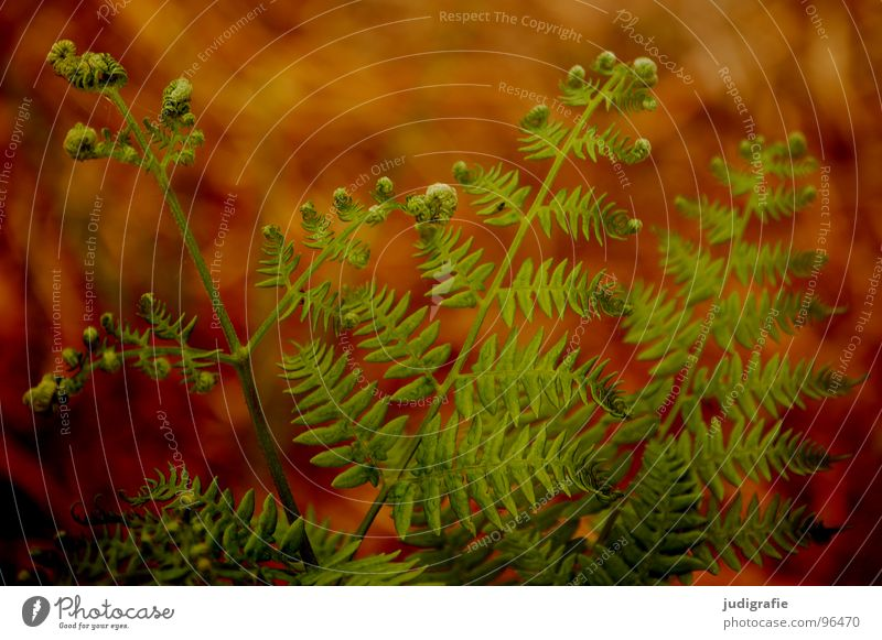 Nature Green Plant Summer Colour Life Warmth Brown Orange Power Growth Romance Physics Fist Shoot Pteridopsida