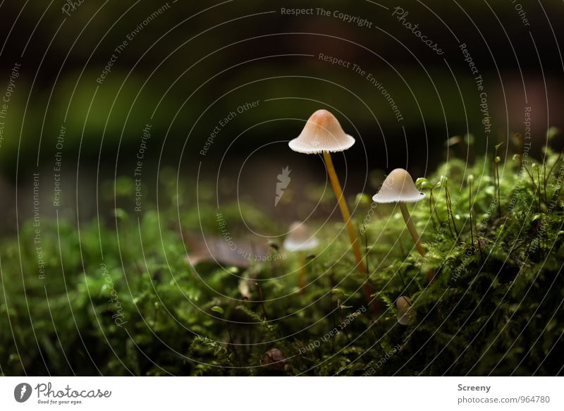 Walk with hat Nature Plant Autumn Moss Mushroom Mushroom cap Forest Growth Thin Small Brown Green Serene Patient Calm Idyll Attachment Colour photo Close-up