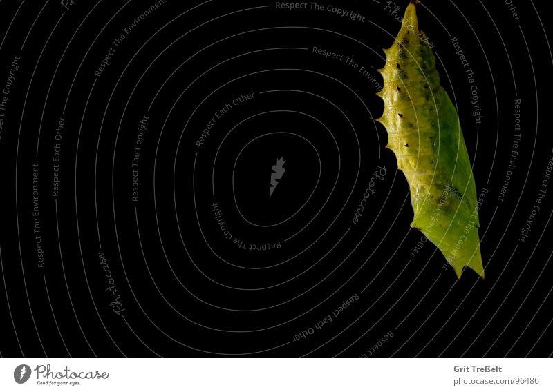 Green Summer Black Meadow Doll Pasture Caterpillar