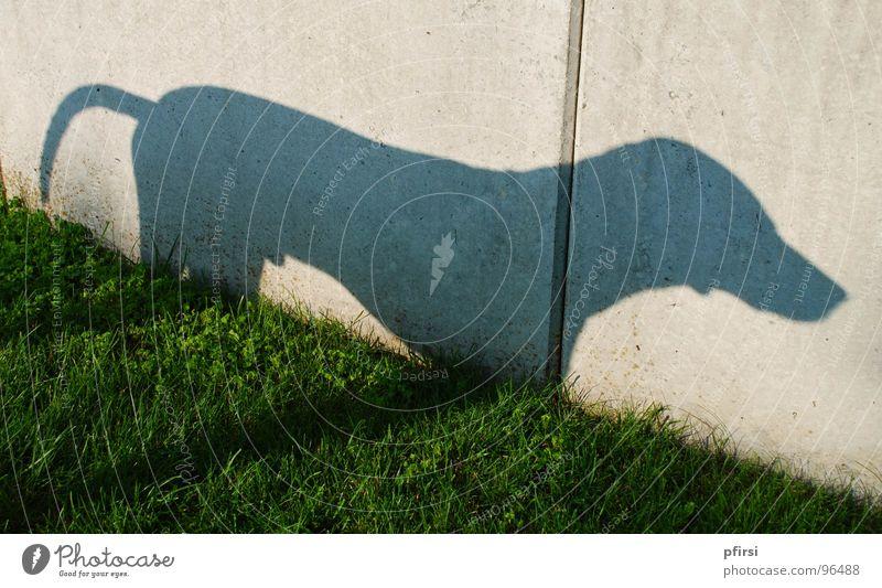 Shadow dog - 2 Dog Dalmatian Meadow Wall (building) Wall (barrier) Animal Pet Shadow play Light Mammal chien dalmation Self portrait sun Silhouette