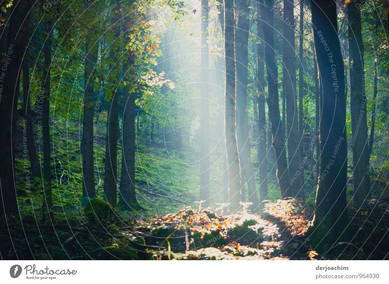 Nature Beautiful Green Sun Tree Calm Joy Forest Autumn Wood Happy Exceptional Brown Germany Leisure and hobbies Contentment