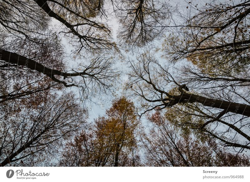 OVERHANG Nature Landscape Plant Sky Clouds Autumn Tree Forest Growth Threat Creepy Emotions Moody Power Fear Nerviness Timidity Colour photo Exterior shot
