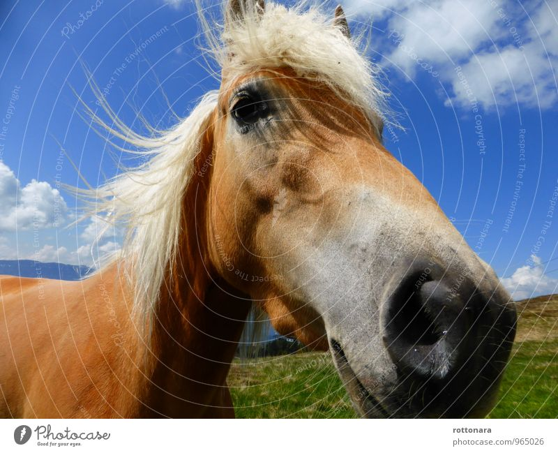 happy horse Landscape Animal Pet Horse 1 Friendliness Large Good Natural Blue Brown Green Contentment Love of animals Pride Elegant Energy Freedom Power Nature
