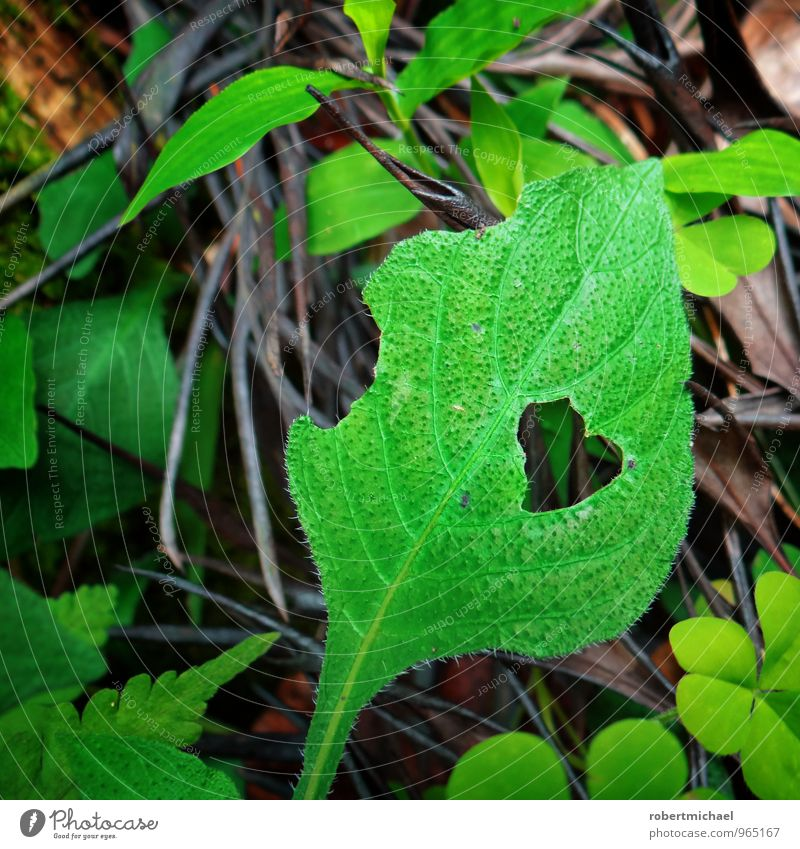 Hungry for Love Nature Plant Leaf Foliage plant Cloverleaf Fern leaf Blossoming Feeding Growth Green Emotions Moody Joie de vivre (Vitality) Spring fever