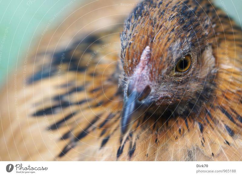 Green Calm Animal Black Eyes Feminine Natural Gray Brown Food Bird Head Orange Sit Wait Nutrition