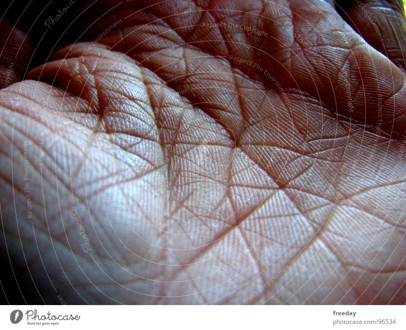Human being Hand Life Senior citizen Healthy Line Skin Fingers Reading Touch Network Past Contact Tracks Catch Craft (trade)
