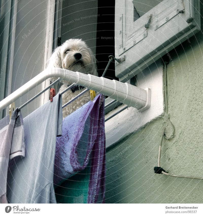 Window Dog Wait Mammal Laundry Dry Guard Washing day