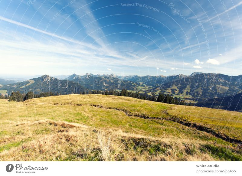 Let's go to the mountains! Environment Nature Landscape Plant Sky Cloudless sky Spring Summer Weather Beautiful weather Meadow Forest Alps Mountain Hiking
