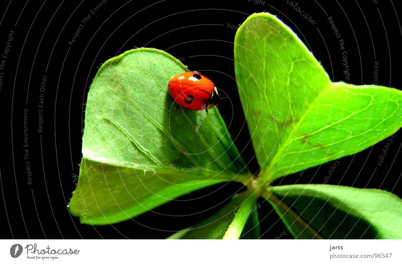 Joy Happy Contentment Hope Desire Ladybird Clover Cloverleaf Congratulations