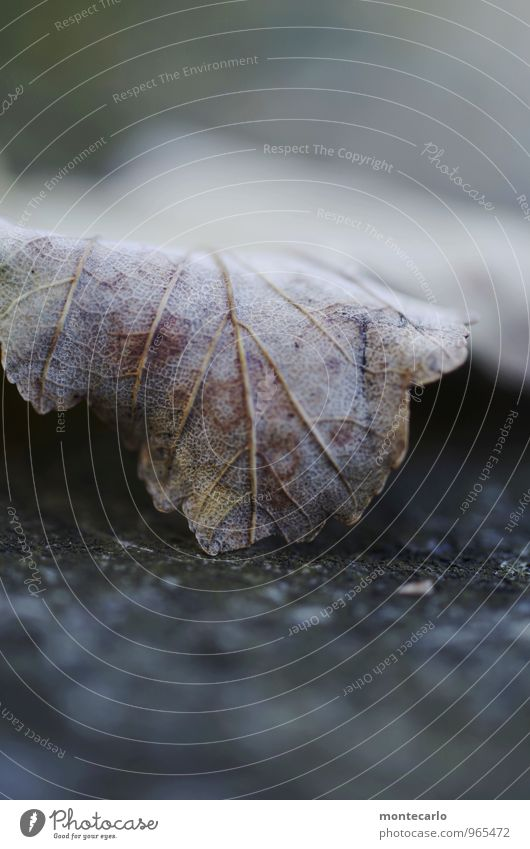 Nature Old Plant Leaf Dark Cold Environment Autumn Natural Brown Gloomy Authentic Soft Simple Thin Near