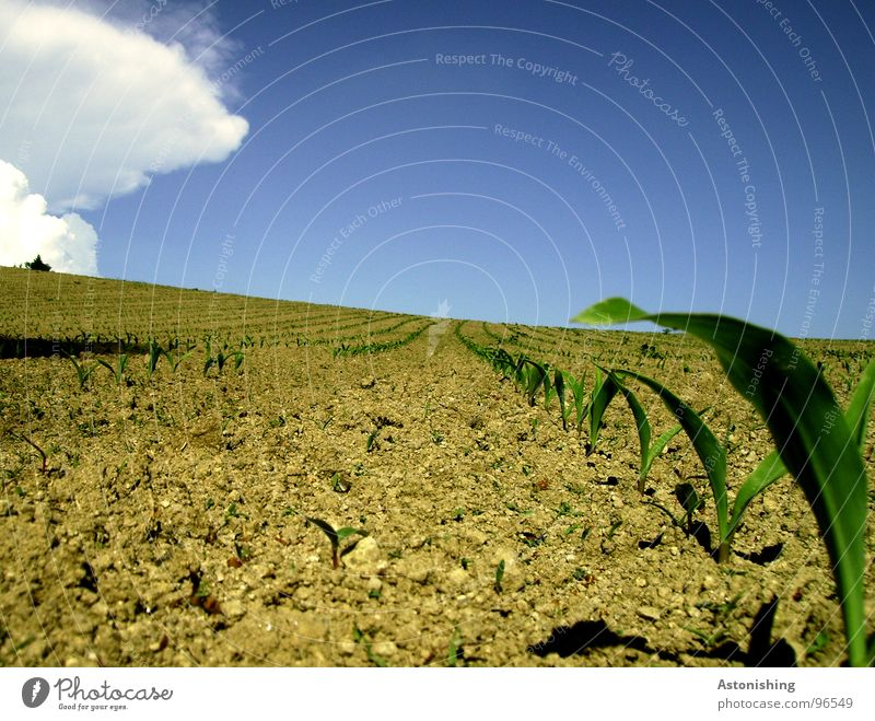 Nature Sky White Green Blue Plant Summer Leaf Clouds Landscape Brown Field Dirty Small Weather Environment