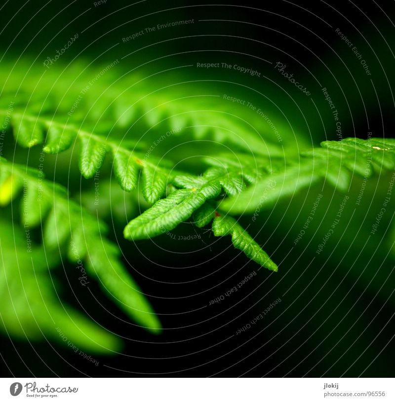Nature Green Plant Dark Spring Growth Soft Touch Delicate Damp Smooth Biology Pteridopsida Spore