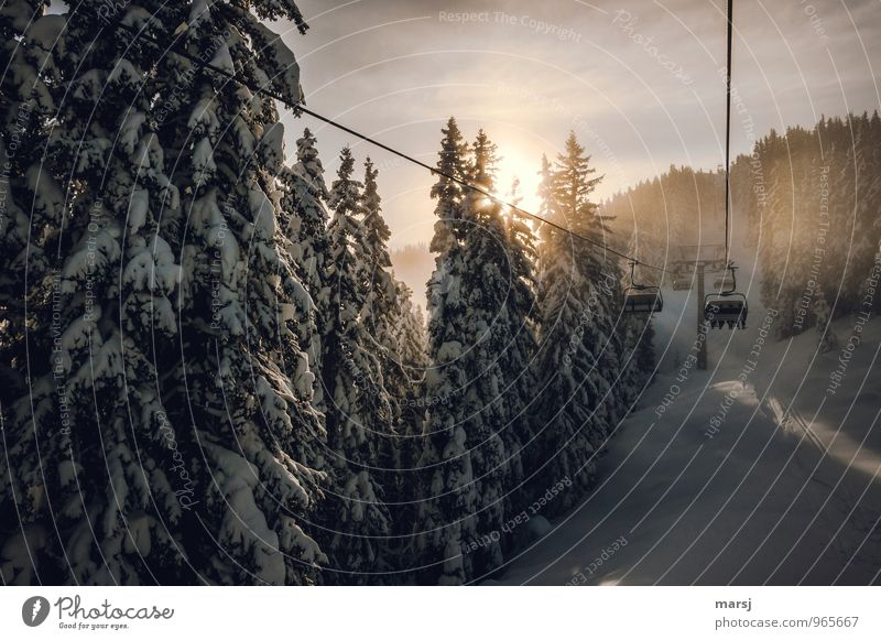Here we go! Vacation & Travel Trip Winter Snow Winter vacation Sports Winter sports Skiing Ski lift Chair lift Nature Sunlight Beautiful weather Forest Mountain
