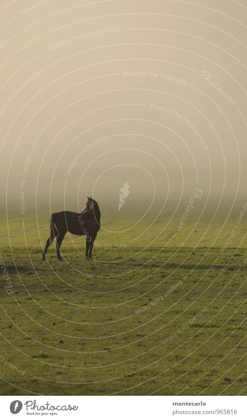 There's a horse standing there.... Environment Nature Plant Earth Sunlight Autumn Weather Beautiful weather Fog Grass Meadow Field Animal Horse 1 Observe
