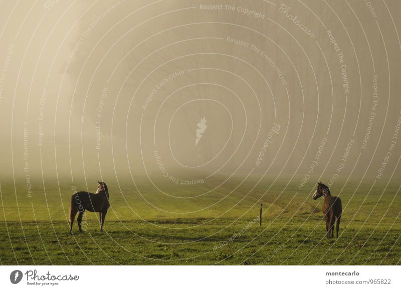 Nature Plant Tree Animal Environment Autumn Weather Field Earth Fog Wild animal Stand Wait Observe Beautiful weather Horse