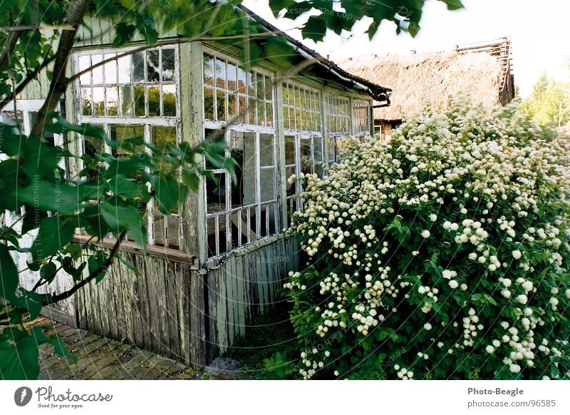 Old Green House (Residential Structure) Loneliness Wood Sadness Building Glass Grief Romance Construction site Transience Idyll Derelict Decline