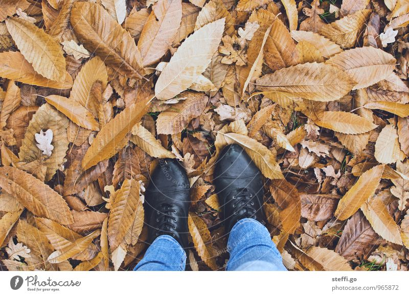 Human being Vacation & Travel Leaf Forest Cold Autumn Feminine Freedom Going Brown Feet Park Tourism Stand Footwear Hiking