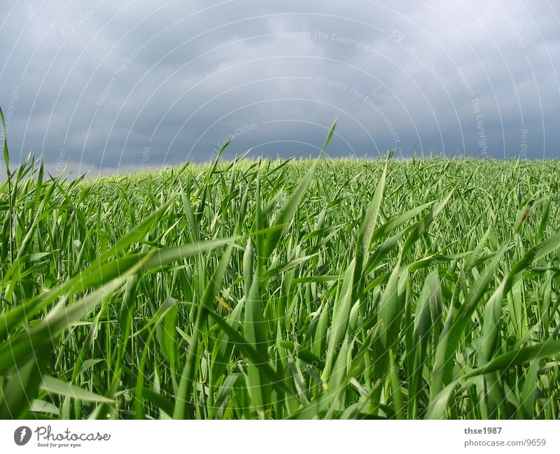 Nature Blue Green Clouds Calm Far-off places Landscape Meadow Rain Weather Wind Field Growth Agriculture Serene Storm