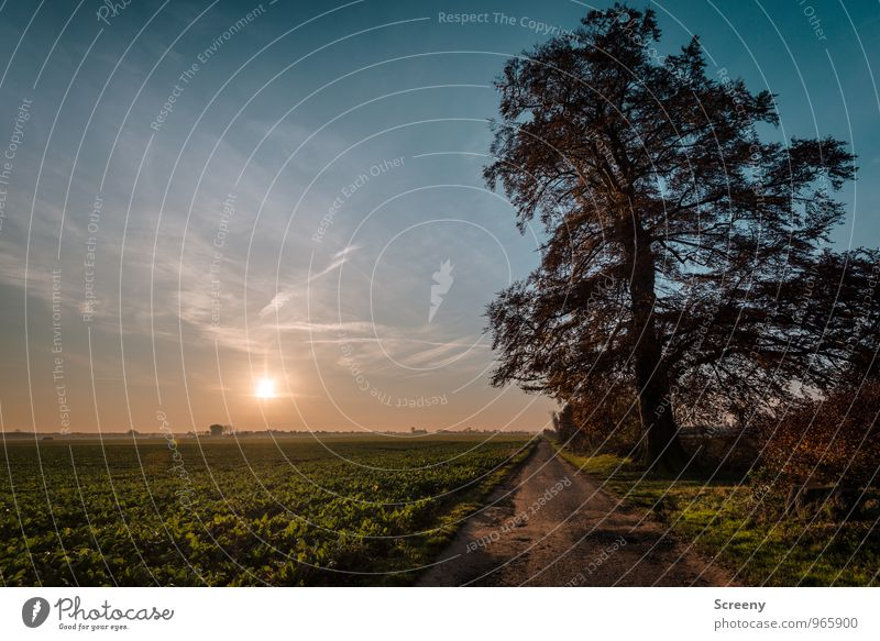 The old tree Nature Landscape Plant Earth Air Sky Sun Sunrise Sunset Sunlight Autumn Tree Grass Bushes Agricultural crop Field Growth Old Large Calm Loneliness
