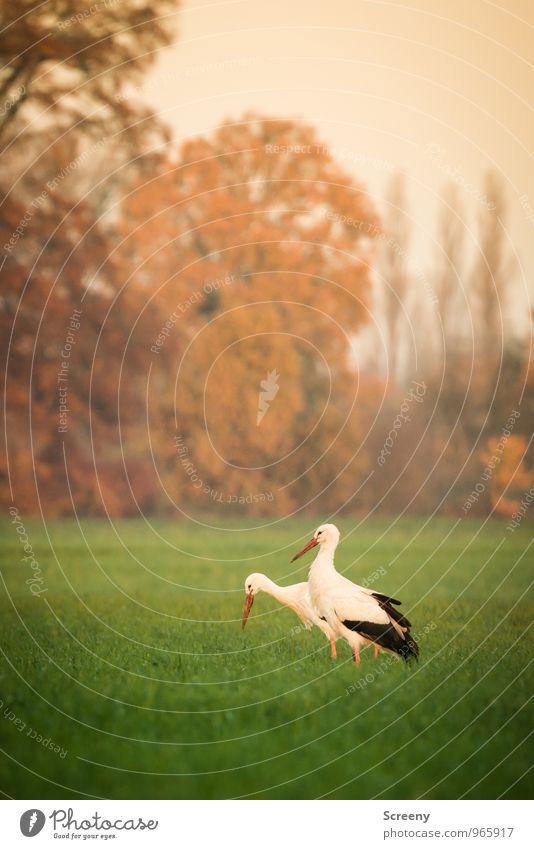 Nature Plant Green White Landscape Calm Animal Black Environment Autumn Meadow Grass Natural Brown Bird Field