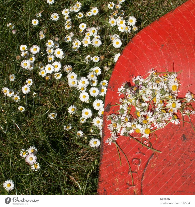 Death suits them well too Daisy Mow the lawn Yellow Green White Spring Meadow Lawnmower Fresh Flower Hope Transience Beautiful