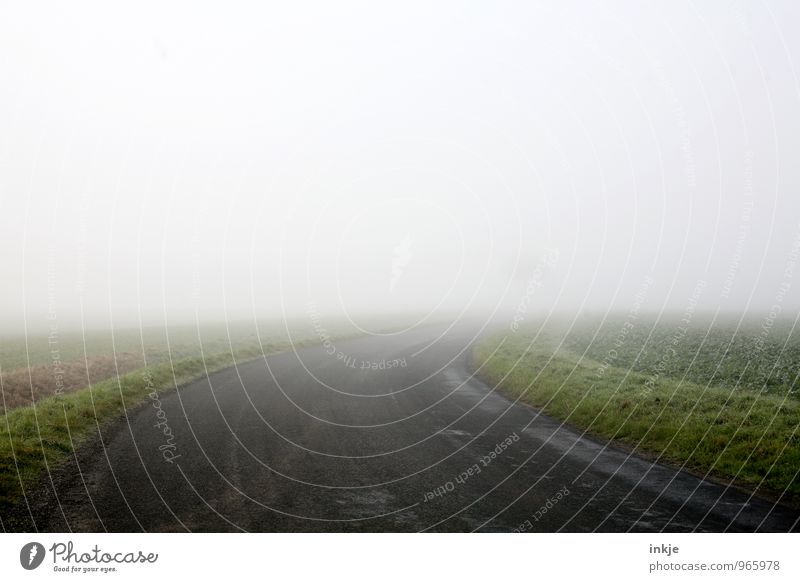up to the tree and further out Environment Landscape Air Horizon Autumn Winter Fog Field Deserted Transport Lanes & trails Country road Curve Gloomy Loneliness