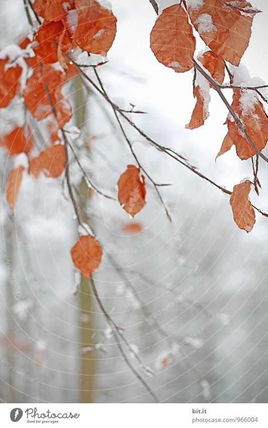 Nature Vacation & Travel Plant Tree Relaxation Calm Winter Forest Environment Autumn Snow Snowfall Ice Future Change Frost