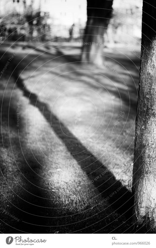 tree Environment Nature Autumn Climate Weather Beautiful weather Tree Park Meadow Tree trunk Shadow play Black & white photo Exterior shot Deserted Day Light