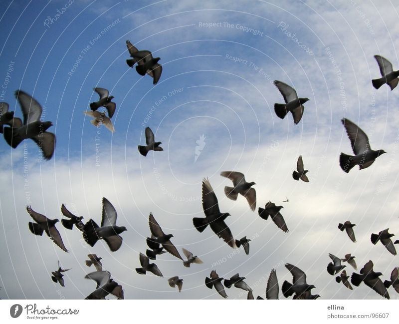 a sea of pigeons in Barcelona Colour photo Freedom Sky Clouds Bird Pigeon Wing Flying Far-off places Together Above Many Blue Moody Agreed Love of animals Dream