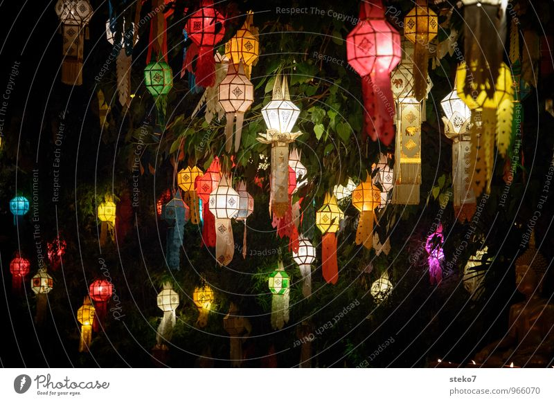 Tree Red Yellow Warmth Religion and faith Esthetic Asia Tradition Exotic Lampion Thailand Buddhism