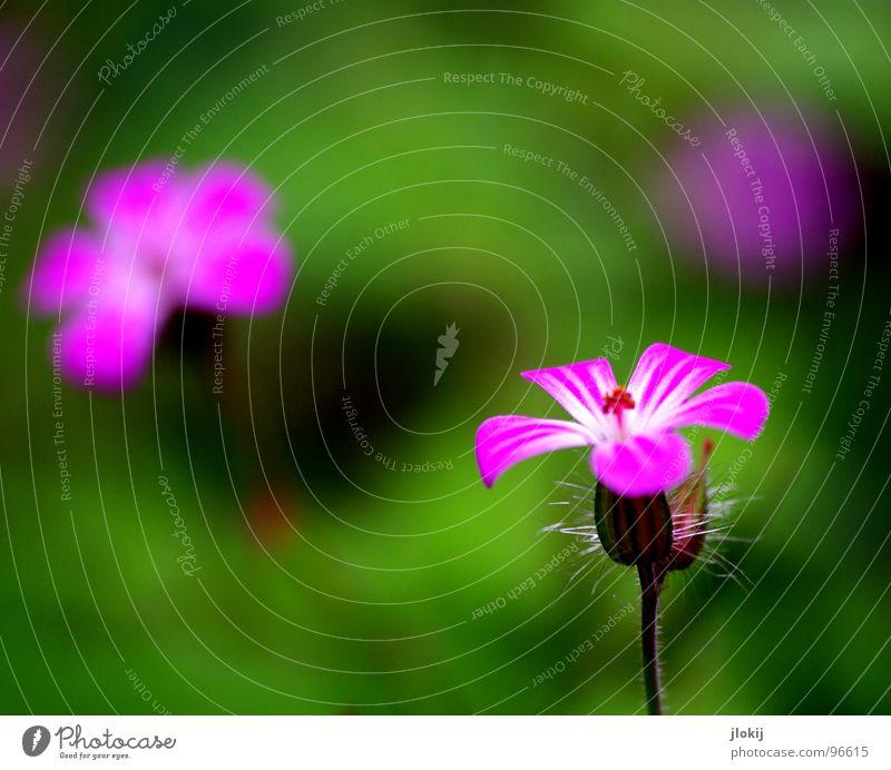 Nature Beautiful Flower Green Plant Calm Colour Lamp Blossom Spring Garden Park 2 3 Growth Violet