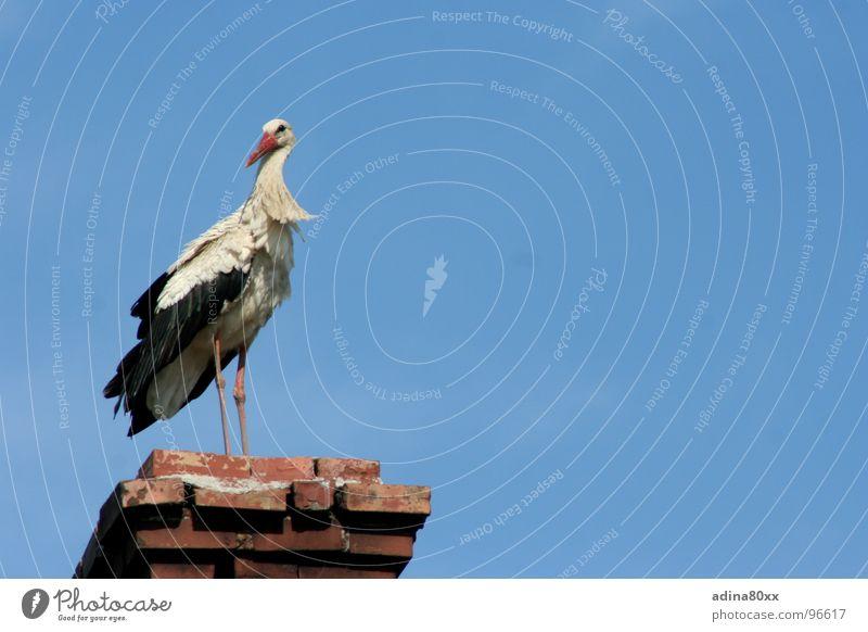 The stork is back... Stork Spring Summer Birth Bird Break New start Offspring Contentment newborn Chimney Joy