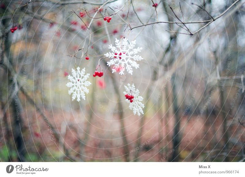 winter decoration Garden Decoration Christmas & Advent Winter Weather Ice Frost Snow Snowfall Bushes Forest Kitsch Odds and ends Hang Cold Snow crystal