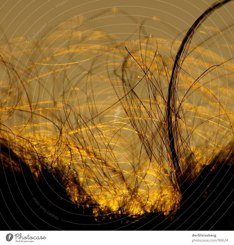 Beautiful Sky Sun Black Yellow Dark Hair and hairstyles Gray Head Warmth Bright Brown Earth Orange Physics Friendliness