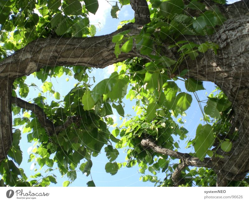 Chill out under the tree Tree trunk Leaf Treetop Branchage Clouds Tree bark Environment Sun Green Bushes Relaxation Summer Sky Nature Beautiful weather Blue