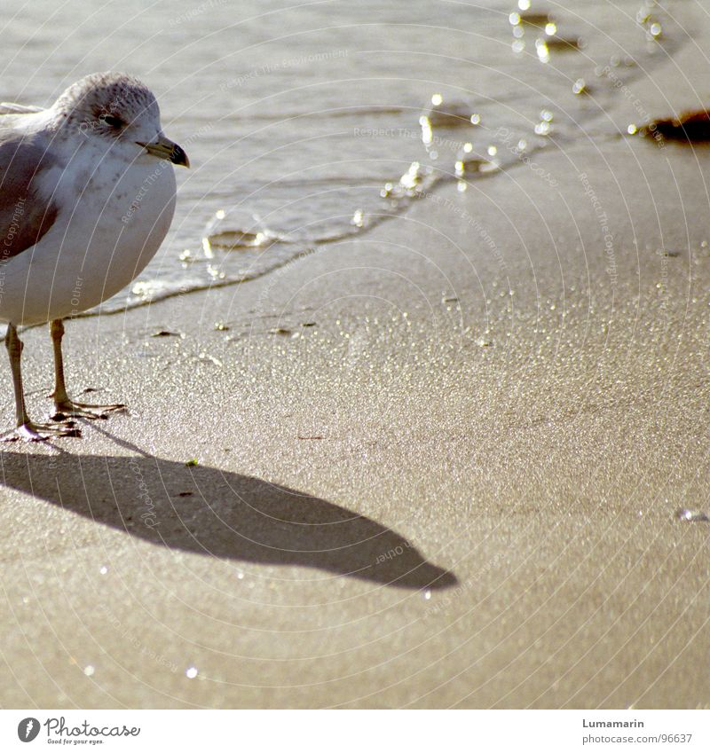 Water White Summer Ocean Beach Calm Warmth Coast Gray Sand Feet Bird Line Wait Stand Corner