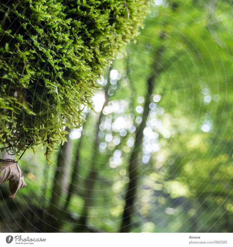 Nature Plant Green Tree Relaxation Forest Environment Natural Growth Fresh Climate Wet Warm-heartedness Moss Virgin forest Hang