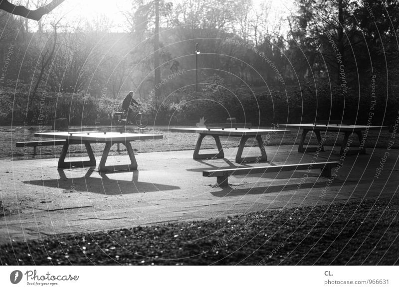 ping pong park Sports Cycling Table tennis table Sporting Complex Human being 1 Environment Nature Landscape Sunlight Autumn Weather Beautiful weather Tree