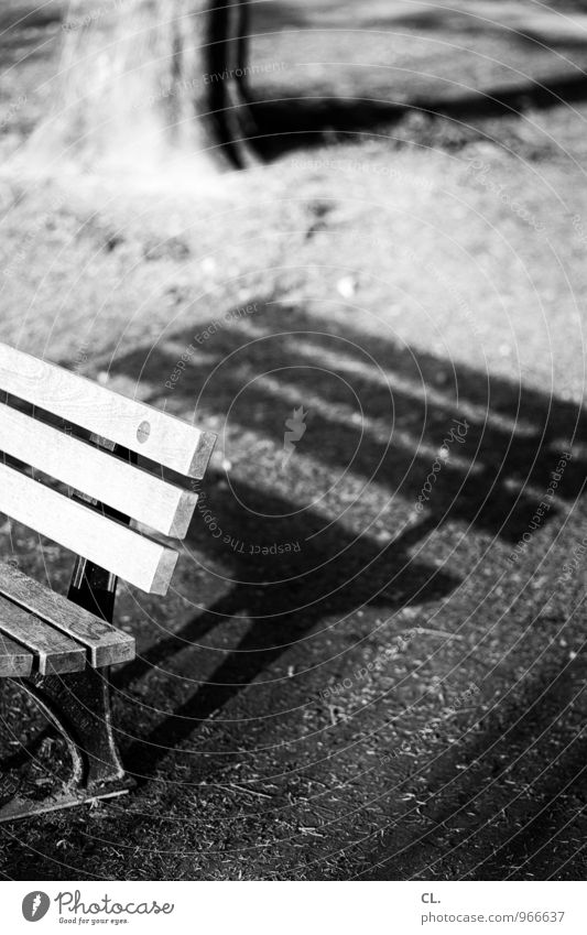Long shadows Environment Nature Beautiful weather Tree Grass Park Meadow Bench Tree trunk Sit Break Calm Black & white photo Exterior shot Deserted Day Light