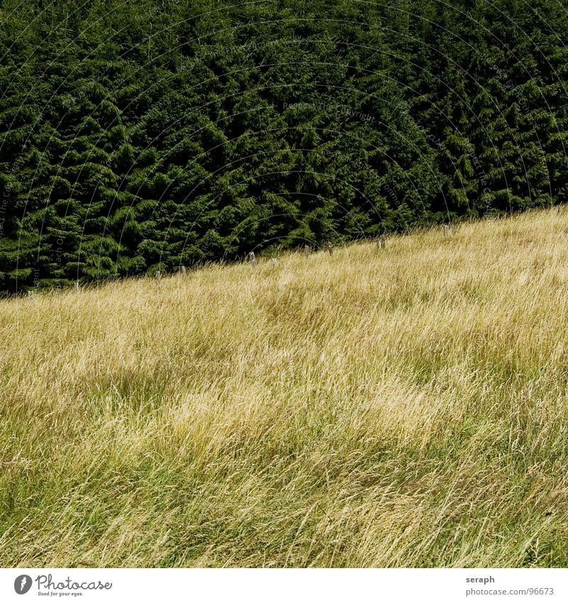 Grassland Meadow Field Fence Pole Barrier Fir tree Tree Coniferous trees Slope Hill Diagonal Forest Structures and shapes Rural Environment Nature Landscape