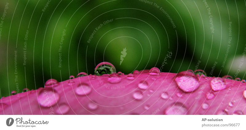 Nature Green Water Leaf Calm Pink Rain Glittering Fresh Drops of water Electricity Wet Rope Round Clarity Near