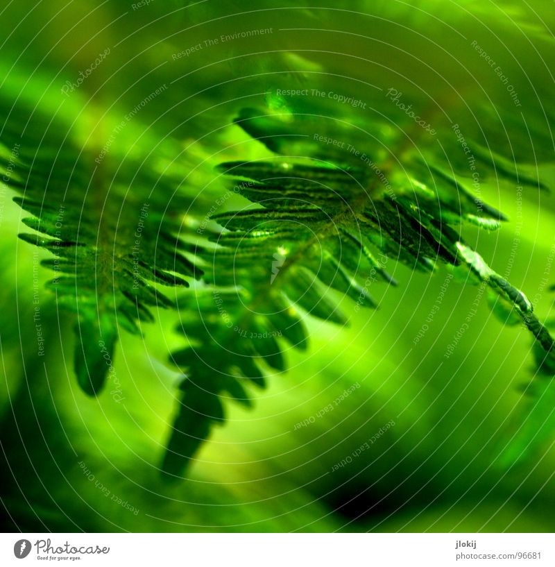 fern vision Plant Green Shadow Damp Dark Biology Growth Pteridopsida Spore Spring Touch Delicate Soft Blur Light Nature wag witchweed Smooth Contrast Reflection