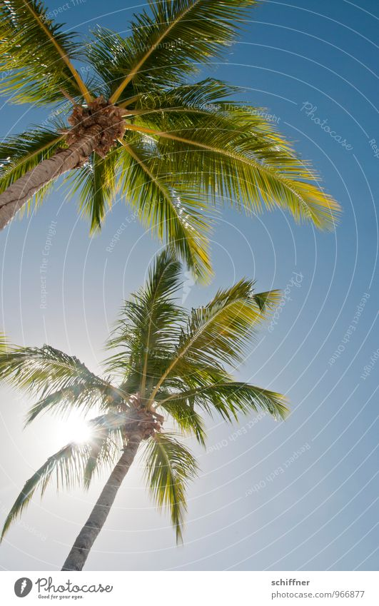 Vacation & Travel Blue Plant Green Summer Tree Beach Travel photography Beautiful weather Cloudless sky Exotic Palm tree Caribbean Sea Beach vacation