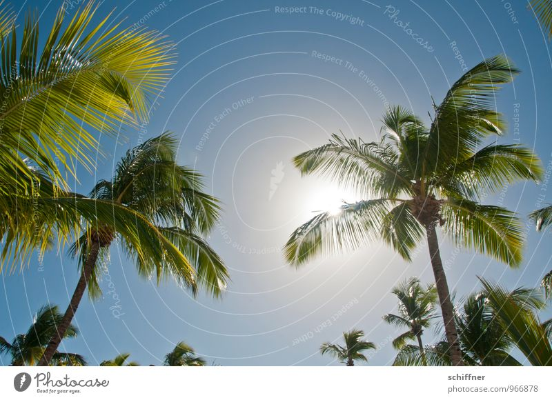 Sky Nature Vacation & Travel Blue Plant Sun Tree Relaxation Dream Island Beautiful weather Cloudless sky Exotic Palm tree Foliage plant Cliche
