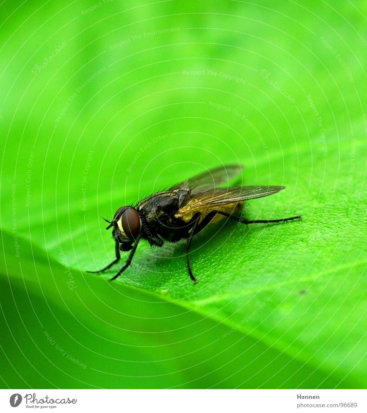 Nature Green Plant Leaf Animal Legs Fly Wing Insect Toilet Punk Calculation Curse Compound eye