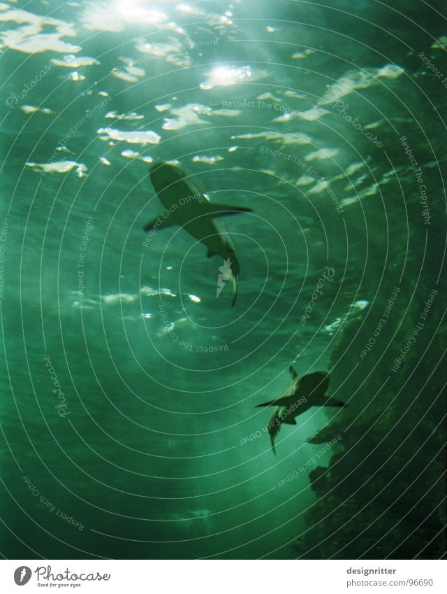 Delicious fish Shark Ocean Dangerous Dark Light Green Fish Water Threat