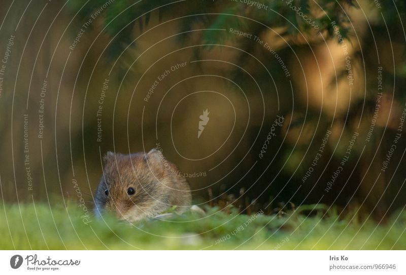 Nature Animal Forest Environment Natural Small Brown Wild animal Perspective Cute Pelt Mouse